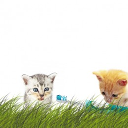 content-marketing-konvertering-landingpage-kitten-toothbrush